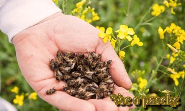 умершие пчелы