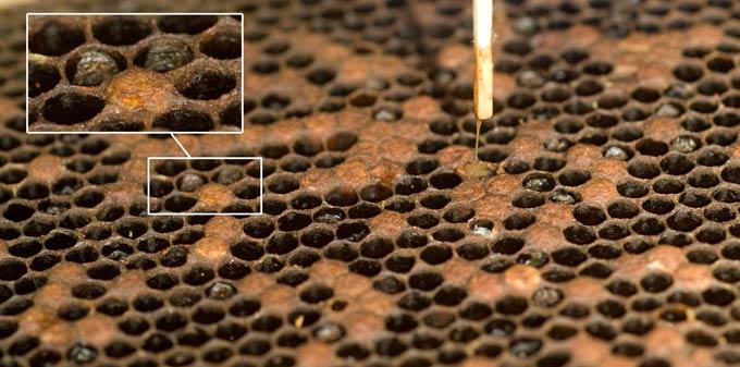 изображение записи - болезни пчел