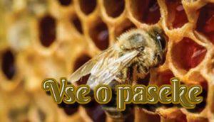 Частые болезни пчел и их правильное лечение