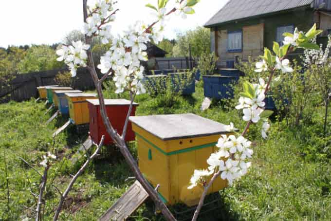 пасека в саду
