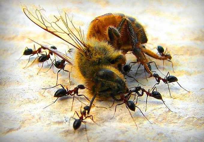 изображение записи-муравьи