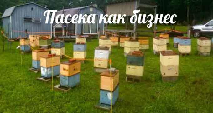 Заработать на пчелах