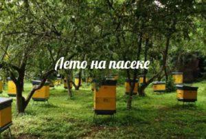 Многокорпусные ульи - секреты содержания пчел