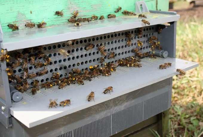 монтаж пыльцеуловителя