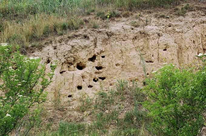 пещерки на обрыве