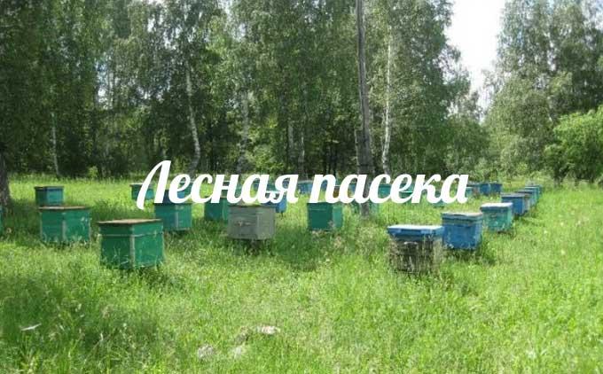 изображение записи-лесное пчеловодство