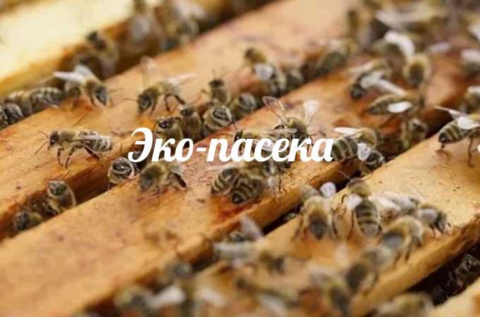 изображение записи-эко пчеловодство