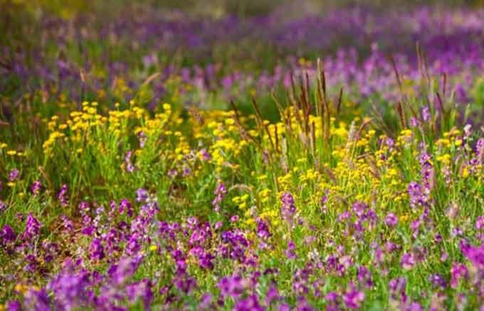 луг с цветущими травами