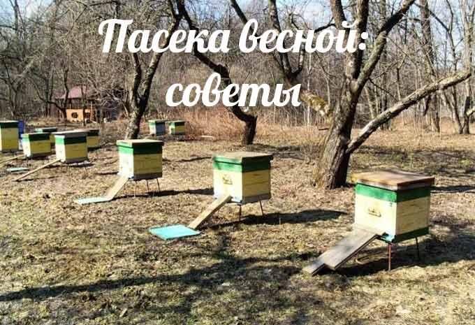 Весна на пасеке – советы опытных пчеловодов