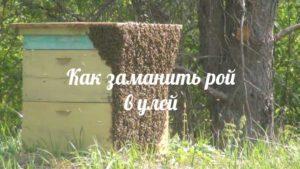 Разведение домашней пасеки при помощи роев