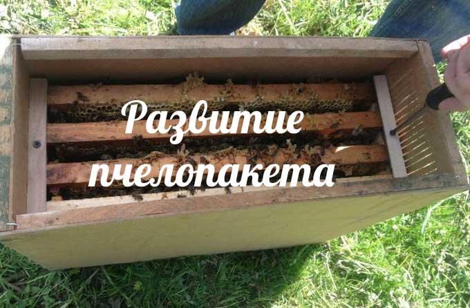 изображение записи-содержание пчелопакетов