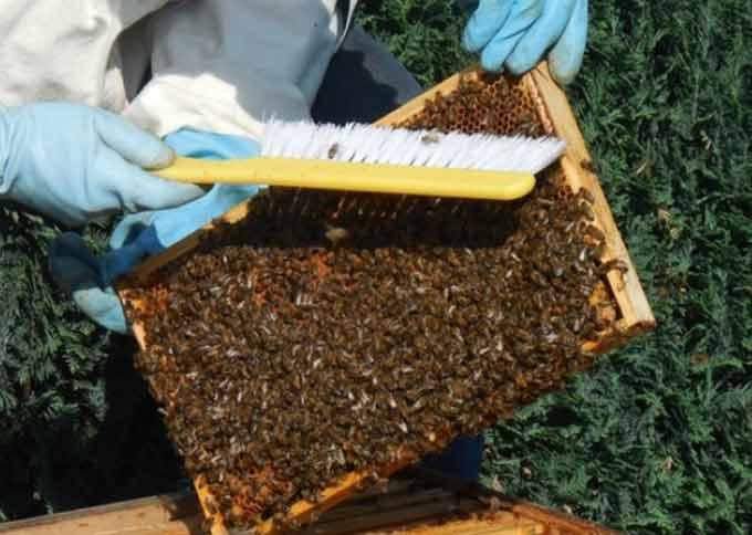 сметание пчел