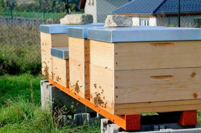 Ульи для пчел – современные стандарты