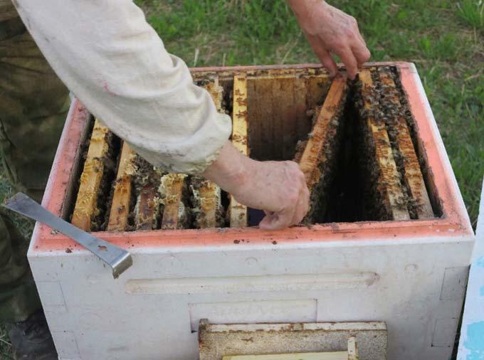 Пенопласт для изготовления ульев своими руками