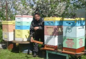 Как правильно окрасить пчелиные ульи