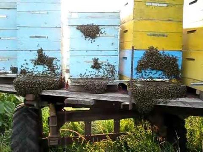 насекомые на стенках