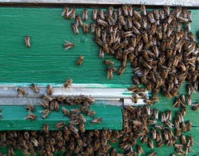 пчелам жарко