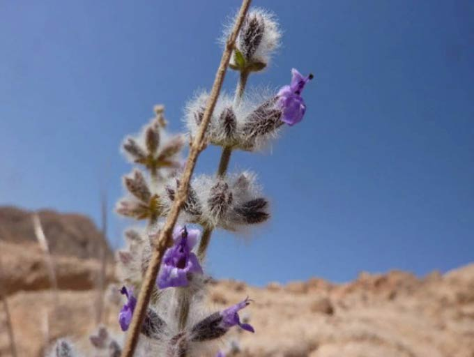 пустынный-фото
