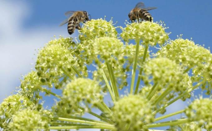пчелы за работой
