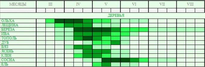 медоносы-таблица-3