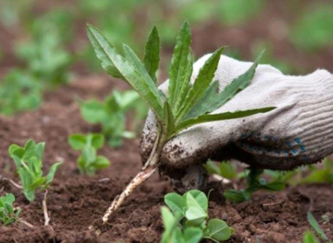 изображение записи-сорняки