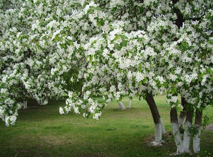 Обзор медоносов весеннего периода с фото