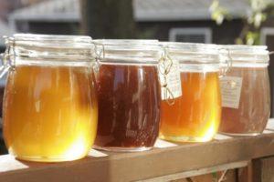 Дягилевый (дягильный) мед