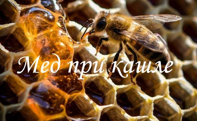 Рекомендации по лечению кашля натуральным медом