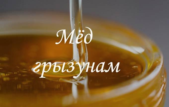изображение записи-мед грызунам